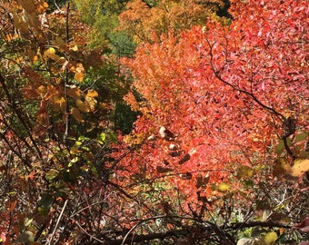 seasonal leaf change