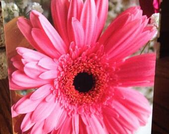 Blank Note Card - Pink Gebera Daisy
