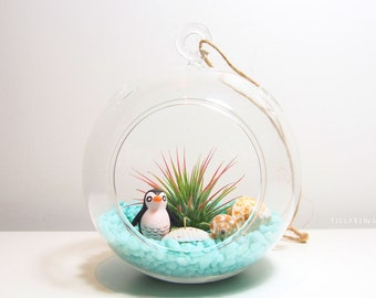 Sea World Air Plant/Tillandsia with Cute Penguin Terrarium Kit