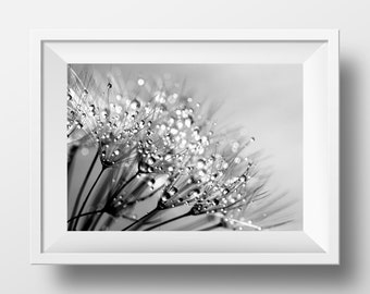 Dandelion photograph, dandelion print, nature photography, macro photography, black and white, dandelion photo, dandelion decor, bedroom art