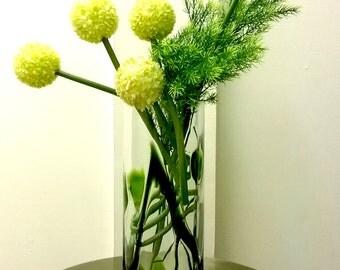 Allium Giant arrangement F1518