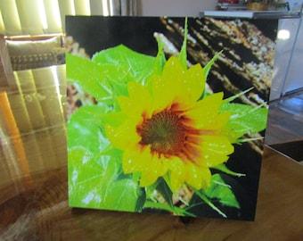 Bright yellow leafy green sunflower