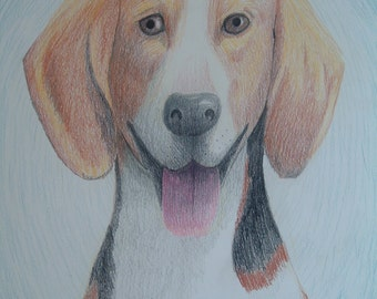Custom, hand drawn pet portrait, colored pencil