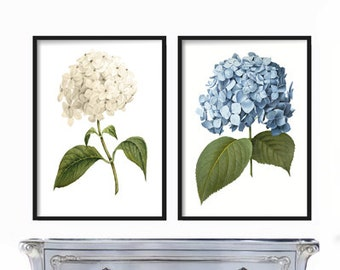 Botanical Print Set of 2 - Antique Hydrangea Flower Prints, Botanical Illustration Decor, Canvas Art, Botanical Illustration Wall Art Decor
