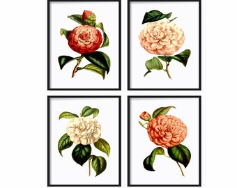 Botanical Print Set of 4 - Botanical Illustration - Giclee Art Print - Vintage Botanical Prints -  Botanical Posters -  Floral Wall Art