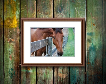 Connection  photograph fine art print horse equine chromogenic c-print intense color beautiful personal yours