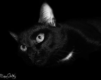 Dive from darkness, A1, poster, pet/cat/black&white photo