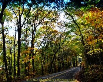 Fall, Colors, Digital Download, Photo, Photography, Arkansas, Roads, Devil's Den,