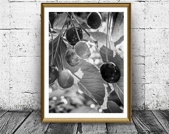 Black and White Cherry Print, Berries Poster, Black and White Photo, Printable Art, Nature Print,  Garden Views