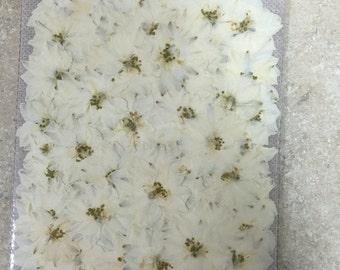 White Larkspur 100 flowers