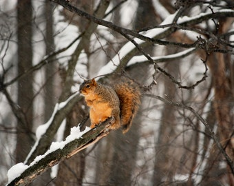 Squirrel in winter tree