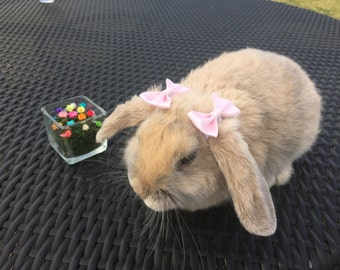 Hair bow / Bunny bows for Rabbits and small animals.