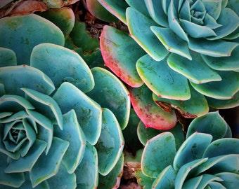 Succulent art print, nature photography print, garden fauna macro print