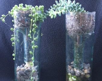 Wine Bottle Terrarium--Handmade