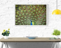 Peacock Wall Art Print, Blue, Green, Turquoise, Feathers, Digital Printable Art, High Resolution Print, Mini to Poster-Sized