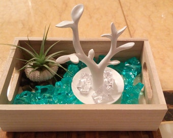 Custom accessories box with air plant in sea urchin