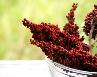 """Red Sumac Berry Branches (Real, Dried) in Bunches of 10 - for Weddings, Centerpieces, Crafts, Office & Home Decor - 7"""" to 12"""""""