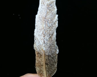 Large crystallized feather