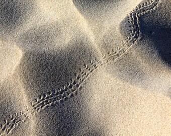 Lizard tracks in sand