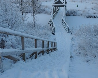 Winter Nateure Snow Photography Instant download