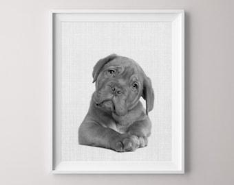 Animal Printable, Puppy, Canvas Pictures, Bulldog, Canvas Print, Nursery Print, Dog Print, Peekaboo Animals, Nursery Animal Print, Puppy
