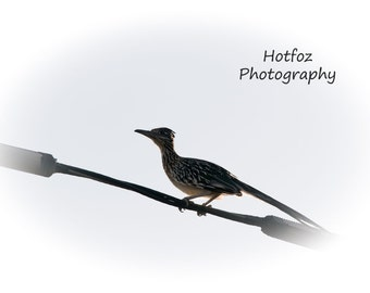 Road Runner On A Wire In Albuquerque, NM Digital Download