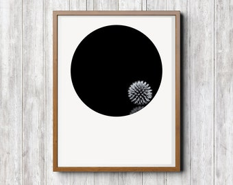 Minimal Photography, Still life, Print Download, Black and White, Abstract, Photo Art, Nature, Dry Flower, Home Office Hotel Decor