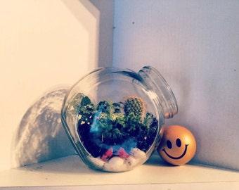 Lovely little terrarium