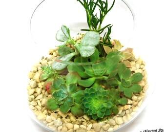 DIY Terrarium Kit, Large Glass Bowl, Living Succulent Gift, Succulent Terrarium Kit, Succulent Garden, Green Gift, indoor garden,Papa Sphere
