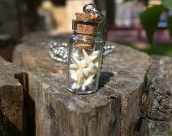 Opossum teeth necklace, Taxidermy