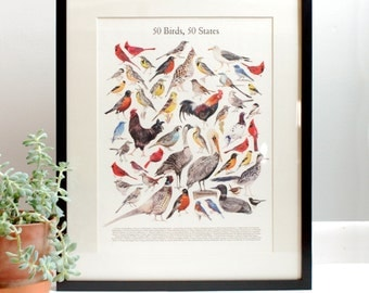 50 Birds, 50 States Print || Illustrated Guide to State Birds