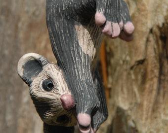 Hanging baby possum