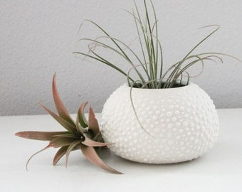 Urchin Vase Celadon - Sweet Pea in Celadon Blue Green Small - Round Pottery Vase with Dots - Air Plant Container - Round Air Plant Vase