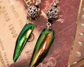 Fancy Filigree Beetle Wing Earrings
