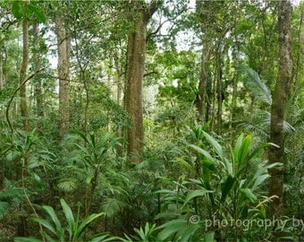 Rainforest Panorama - 32x10inch (81x25cm) nature photography print, landscape fine art forest green woodland Australia home decor wilderness