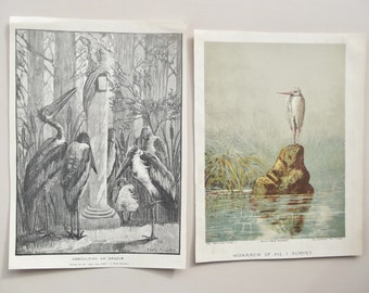 Antique heron prints two from Boy's Own Paper pair illustrations Fred Miller Ernest Griset herons consulting oracle and lone heron on rock
