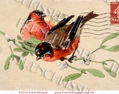 Christmas Birds Mistletoe Antique Paris French Postcard Red Breasted Robins  Instant Download