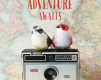 Adventure Awaits - bird vintage map camera typography photo, map, pastel tones, bird decor, wanderlust, travel photography, whimsical