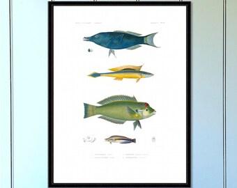 Fish Series (no.3) Antique Reproduction Print  coastal art wall art vintage print home decor antique print nautical print giclee