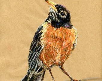 Original Drawing - Robin - Bird Art in Charcoal, Chalk Pastel & Ink
