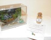 American Girl Pet set - Turtle aquarium, food, care sheet