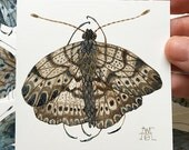 Butterfly GIENA CYGNI, miniature small watercolor painting
