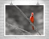 Bird Photography, Red Cardinal Bird, Tucson, Arizona, Sabino Canyon, Bird Print, Gift Bird Lover, Birder Gift, Bird Picture, Wildlife Art
