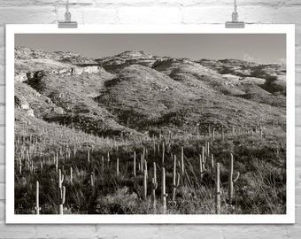 Desert Photography, Saguaro Cactus, Desert Landscape, Tucson Photograph, Black and White, Southwest Deserts, Western Picture, Sonoran Desert