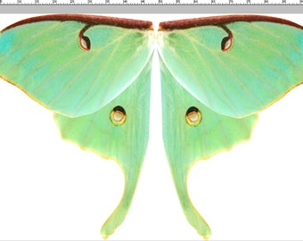 "Huge Green Luna Moth Wing Fabric Panel for Fairy Wings, Moth Cape Costume, 100"" Wingspan"