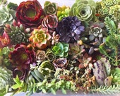 DIY Succulent cutting clipping arrangement display exotic collector wedding bouquet bride bridesmaid rare collectable cactus  favour gift
