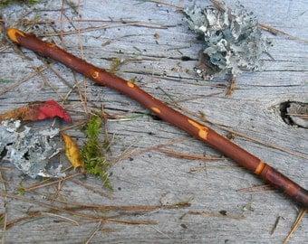 Alder Wand, Natural Wood wand, FREE US Shipping, spiritual growth, magic rituals, natural wood