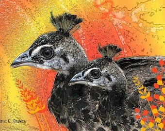 Pheasants ACEO, Bird Art, Black Yellow Orange, Digital Woodland Wildlife, Collectibles Decor, Artists Trading Card, Small Giclee Print