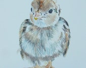 Watercolor of sweet baby quail