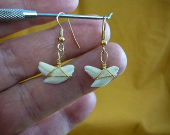 1/2 inch white Modern Tiger Shark Lower Tooth Teeth dangle earrings gold wired JEWELRY I love sharks S818-5